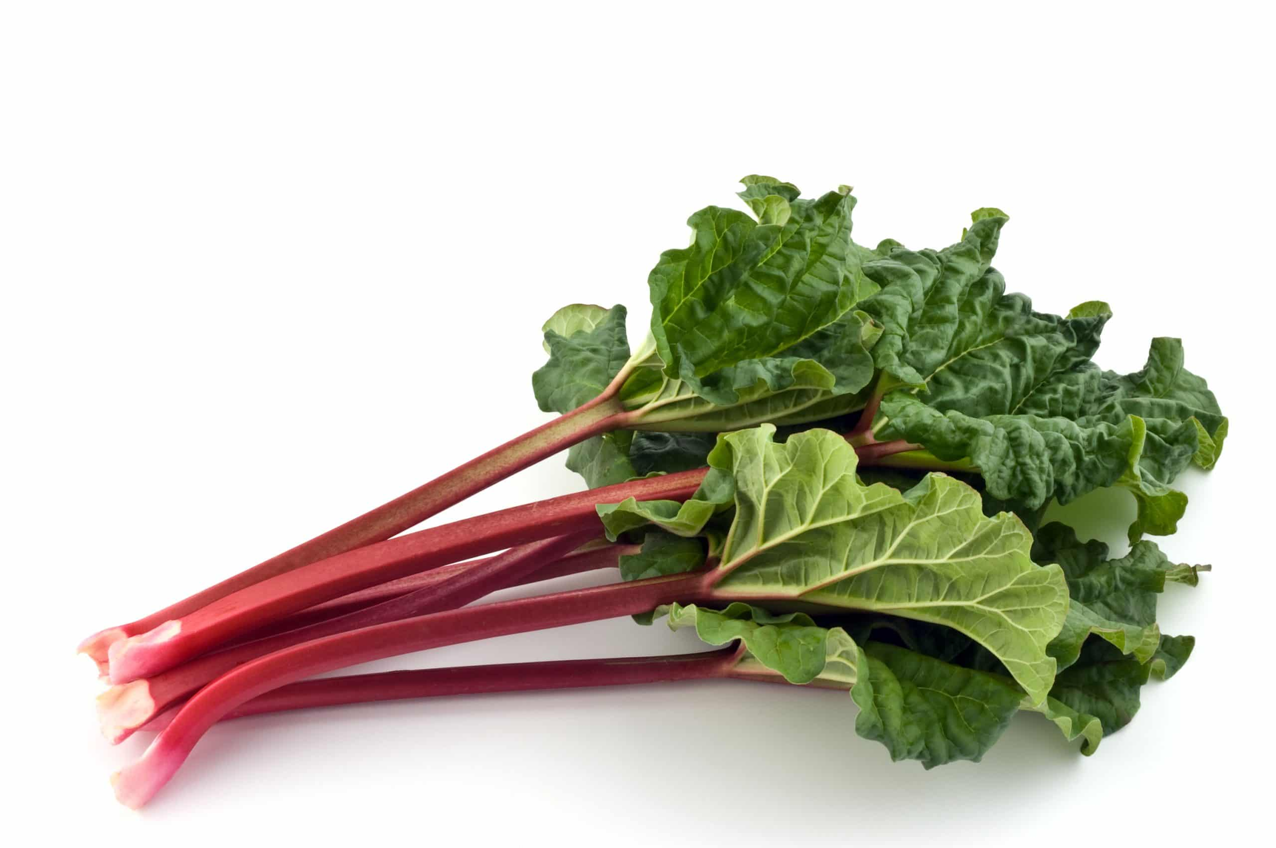 Bunch of fresh picked organic rhubarb isolated on white background
