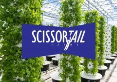 ScissorTailFarms